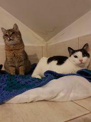 Elsie und Bobby Traumpaar sucht