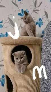 Süße Kätzchen