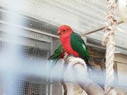 Hobbyzucht Auflösung verschiedene Vögel