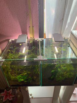 2 Aquarien mit Unterschrank Pflanzen: Kleinanzeigen aus Wörth - Rubrik Fische, Aquaristik