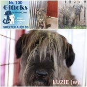 Luzi sucht ein liebevolles Zuhause