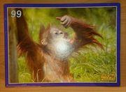 Puzzle Monkeys Affe 99 Teile