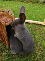 Junge Kaninchen keine Zwerge