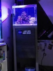 fluval m40 Meerwasser Aquarium Komplett