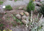 Landschildkröten Gruppe adult 2 6