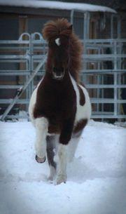Ehemalige zukünftige Ponybesitzer gesucht