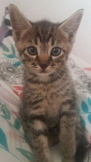 Süßes Katzenbaby zu verkaufen