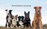 Hundebetreuung Gassi gehen Hundesitting spazieren