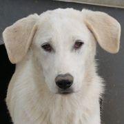 Janeiro vom Hundegarten sucht ein