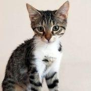 Verspieltes Kätzchen Magic möchte gern