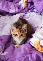 Mascha Katze aus dem Tierschutz