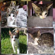 Baby Kater Kitten Nino geimpft