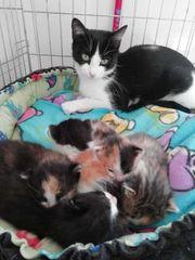 Sanna Katze aus dem Tierschutz