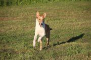 Sicherer Rückruf Mobiles Hundetraining Hundeschule