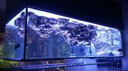 Lebendgestein fürs Meerwasseraquarium
