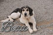 Genießen Sie mit Beau den