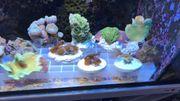 Verschiedene Korallenableger Meerwasser