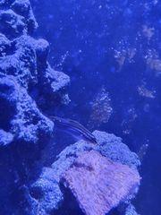 Meerwasseraquarium Komplett