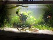 Siche Pflanzen und Fische für