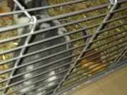 2 Kaninchen abzugeben Käfig