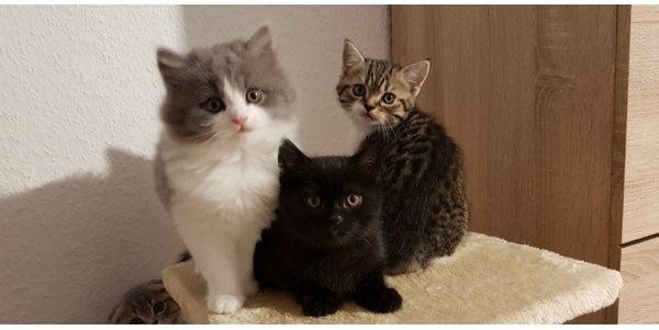 Susse Babys Suchen Neue Zuhause In Nurnberg Katzen Kaufen Und
