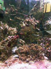 Lebendgestein Salzwasseraquarium