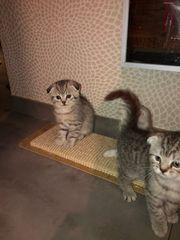 Katzen Babys dürfen ab sofort