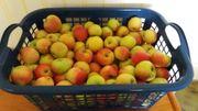 Bio Äpfel Alkmene