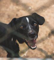 Hundekind BENJI sucht sein Traumkörbchen
