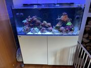 Meerwasser Aquarium RedSea Reefer 425xl