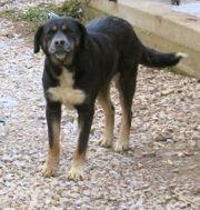 Dita ist ein liebenswertes Hundemädel