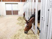 Biete Unterstützung Stallhilfe Pferdebetreuung an