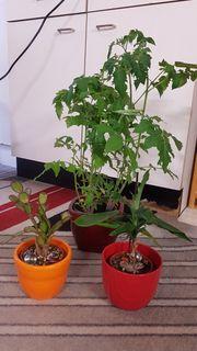 Verschiedene Pflanzen zu verschenken