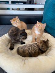 Unsere Kitten sind da Abgabe