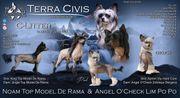 Terra Civis - Wurfankündigung Juni 2021