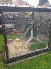 Verkaufe Vogelvoliere Außenbereich