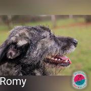 Romy - ich habe eine ganz
