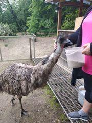 Emu 3 Jahre alt