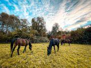 Suche Offenstall für 3 Pferde
