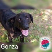 Gonza - ein Geschenk auf vier
