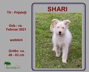 Welpe SHARI auf der Suche