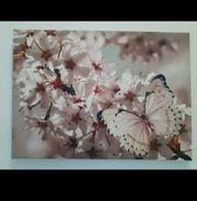 schönes Bild mit Blüten und
