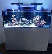 Meerwasser Aquarium Allinclusive