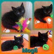 Kitten Baby Kater Mogli geimpft