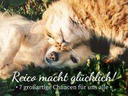 selbstständiger Ernährungsberater für Hund Katze