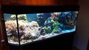 Aquarium Aquariumkombination Meerwasser 320L mit