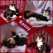 Tricolor Baby Katze Kitten Kessy