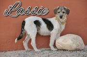 Schreiben Sie mit Lassie weiter