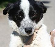 Benji hübscher Hundemann ca 2