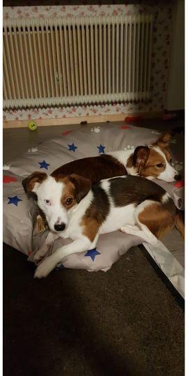 Tierschutzvereine, -heime - Zuhause für Chipsie